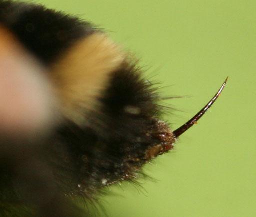 10 000 пчелиных жал – главный секрет особого крема
