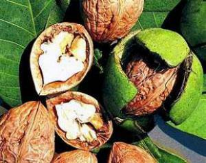 Грецкие орехи замедляют рост опухоли при раке простаты