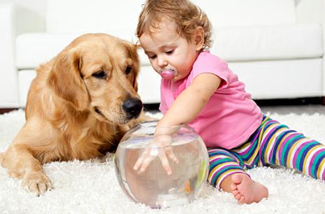 Почему ребенок просит животное