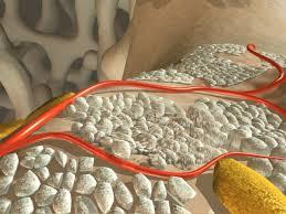 По характеру менопаузы можно установить риск серьезного перелома