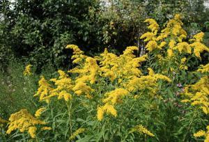 Травы при дисплазии шейки матки