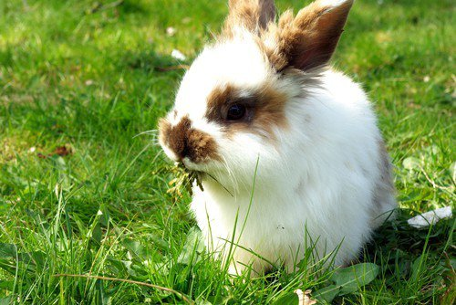 Летнее питание декоративных кроликов