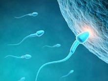 Немецкие изобретатели создали «спермаботы», решающие проблему бесплодия