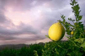 Лимон как противозачаточное