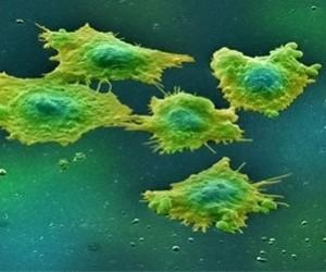Антипаразитарный препарат способен «выключать» рак