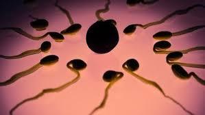 Исследователи подошли вплотную к созданию революционного контрацептива