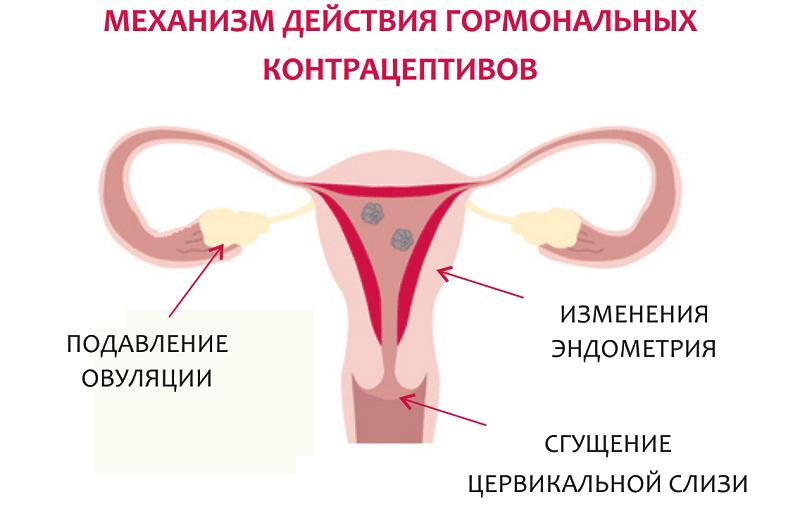 Овуляция и методы контрацепции