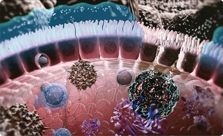 Кожа и иммунитет