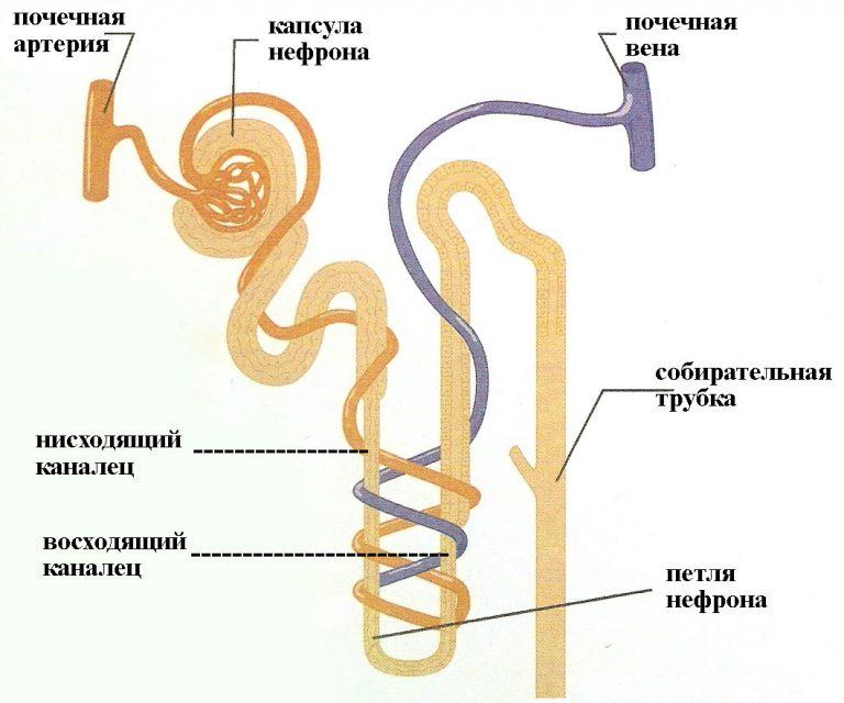 Симптомы почечной колики у женщин и мужчин