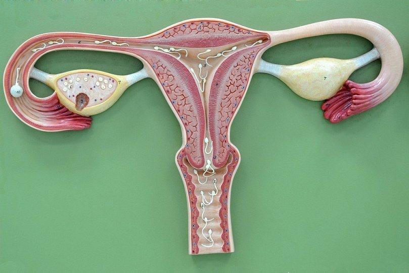 Рентгенография в гинекологии: диагностика аномалий матки