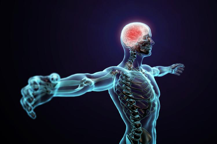 Ученые сделали новое открытие о связи между мозгом и телом