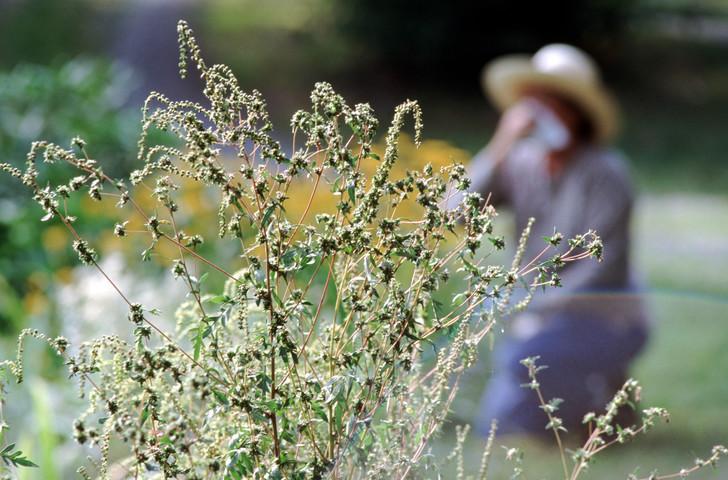 Аллергический дерматит: лечение народными средствами