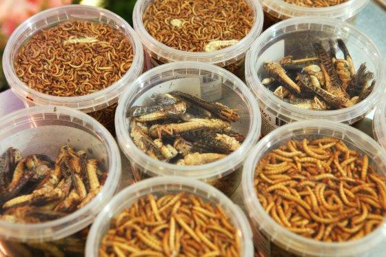 Белковые добавки — корма из насекомых